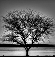 tree,lake,water,black and white, NH,NewHampshire,spring,sky,douglas Harrington